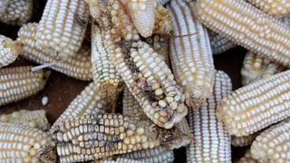 Luftdichte Getreidesäcke gegen den Hunger