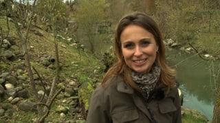 Video «Wildtiere in der Schweiz» abspielen