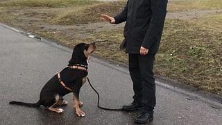 Umstrittene Ausbildung für Halter und ihre Hunde (Artikel enthält Audio)