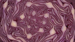 Die Mathematik der Pflanzen (Artikel enthält Bildergalerie)