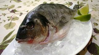 Auch Zuchtfisch gefährlich für Öko-System