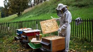 Mehr Honig in Graubünden