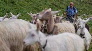 Ziegen- und Schafmilchproduktion: Eine boomende Marktnische