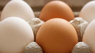 Warum es braune und weisse Hühnereier gibt