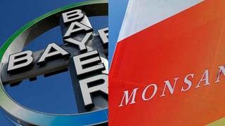 Bayer-Monsanto-Poker: Vorerst noch einvernehmlich