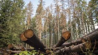 Der Wald leidet still