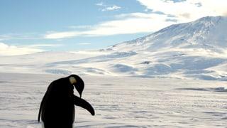 Am Südpol entsteht die grösste Meeresschutzzone der Welt