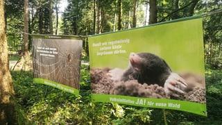 «Die Initiative hat gezeigt, dass der Wald nicht gratis ist»