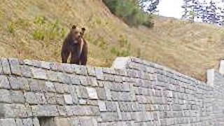 Wir haben wieder einen Bären