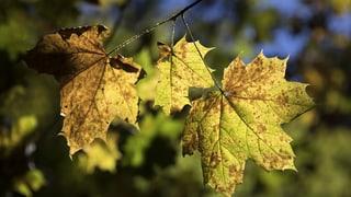 Herbst im Sommer