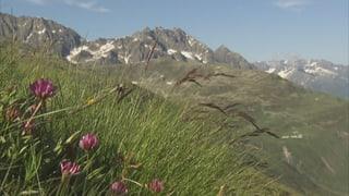 Video «Überlebenskünstler im Hochgebirge» abspielen