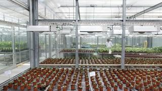 Auch Chemieriesen setzen auf biologischen Pflanzenschutz