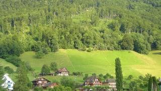 Schutzwaldprojekte werden erweitert