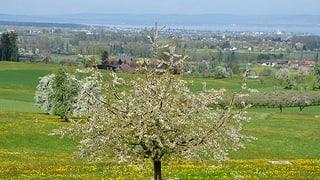 Hürde Bauland für Reka-Feriendorf am Bodensee