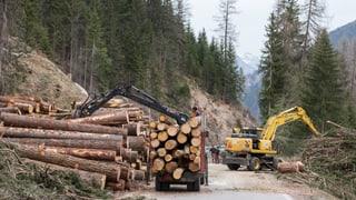 Waldgesetz sorgt für Zwist zwischen den Räten