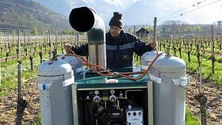 Die Weinbauern im Kanton Graubünden versuchen ihre Reben vor dem Frost zu schützen