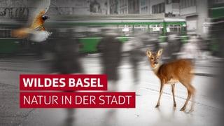 Wildes Basel