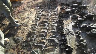 Hunderte Tierknochen im Güllenloch