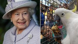 Tierisch: Queen gratuliert Kakadu Fred zum 100. Geburtstag