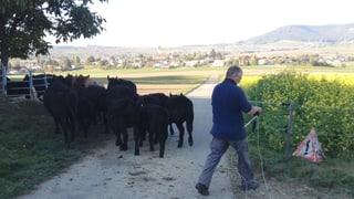 Ein Bauer zieht Bilanz nach Umstieg auf Bio (Artikel enthält Audio)