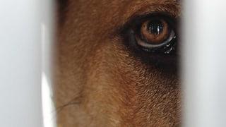 Gefängnisstrafen für Tierquäler gefordert
