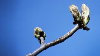 Frühling: Die Lust am Neuanfang