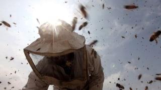 «Die Bienenvölker sind in einem ziemlich guten Zustand»
