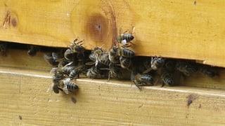 Der Kanton Bern handelt bereits und will Schutzzonen für Bienen einrichten.