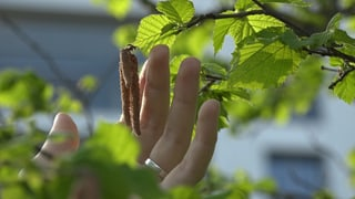 Baumbeobachtungen im Dienste der Wissenschaft