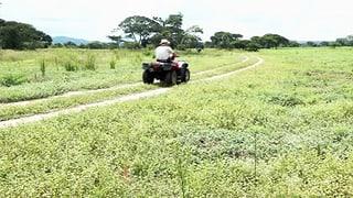 Rückkehr der weissen Farmer in ihr gelobtes Land