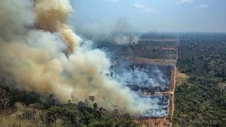 Bolsonaro stellt Bedingungen für Hilfsangebot der G7-Staaten