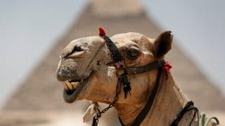 Es geht aufwärts mit der ägyptischen Wirtschaft
