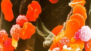 Wir bestehen aus 1'000'000'000'000 Zellen