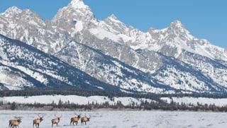 Yellowstone Nationalpark – Überleben im Winter