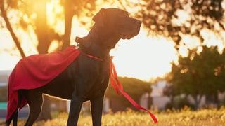 Der Hund – der Held von heute?