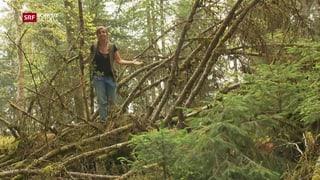 Ein gesunder Wald braucht tote Bäume