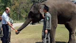 Herzensangelegenheit: Prinz William kämpft gegen Elfenbein-Handel