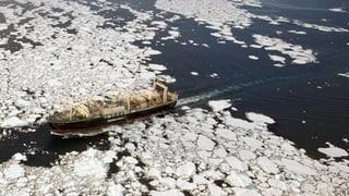 Japan jagt erneut Wale in der Antarktis
