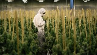 Besteuert der Bund legale Cannabis-Blüten unrechtmässig?