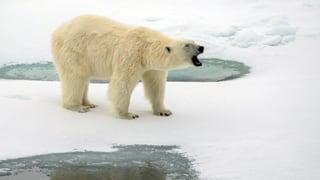 Der Arktische Rat beschliesst grössere Anstrengungen gegen die Eisschmelze – und auch die USA stimmen diesem Bekenntnis zu.