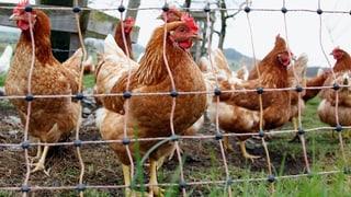 Vogelgrippe: Kanton St. Gallen verschärft Massnahmen