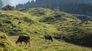 In der Schweiz grasen immer weniger Milchkühe