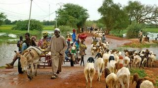 Mali: Von der Vorzeigedemokratie ins Chaos