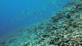 Drama um Great Barrier Reef zwingt Australien zum Handeln