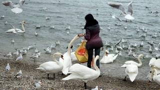 «Bitte nicht füttern», empfiehlt der Kanton Bern