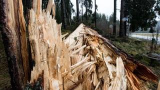 «Burglind» reisst zehntausende Bäume um