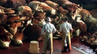 Rinderwahnsinn – schon vergessen?