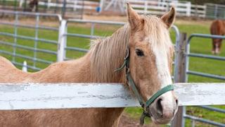 So viel kostet ein eigenes Pferd