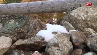 Dispita per passagi tras terren privat en Val Bever