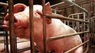 «Wir führen Krieg gegen die Tiere, die wir essen»